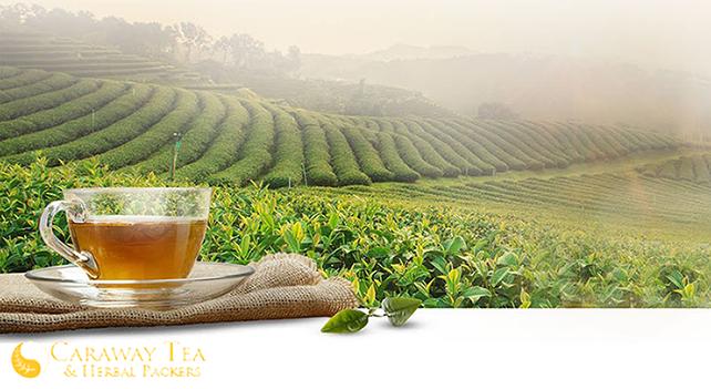Tea Manufacturing Company Success | MTEC